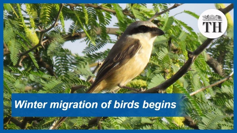 Watch: Winter Migration of Birds Begins