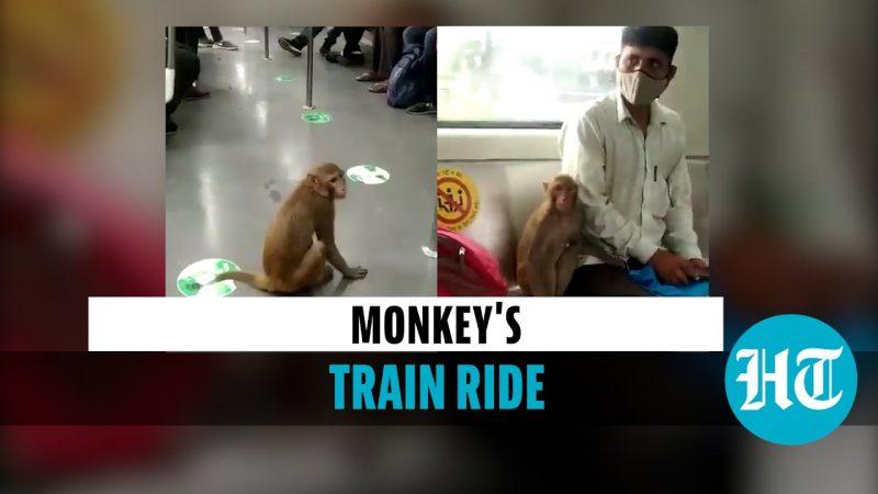Watch Viral Video of Monkey Taking a Ride in Delhi Metro