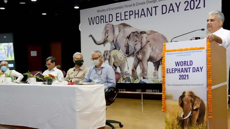Elephant Day 2021 Highlights Need for Ecosystem Conservation